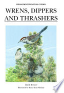 Wrens Dippers And Thrashers