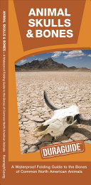 Animal Skulls and Bones