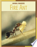 Fire Ant : some kinds of fire ants...