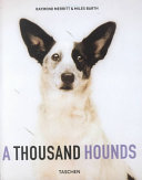 illustration du livre A thousand hounds