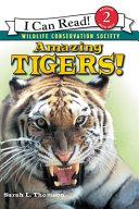 Amazing Tigers