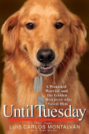 Until Tuesday Lovable Golden Retriever Changes A Former Soldier S Life