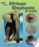African Elephants Up Close