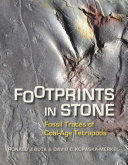 Footprints in Stone