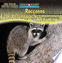 Raccoons Are Night Animals   Los mapaches son animales nocturnos