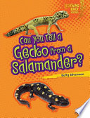 Can You Tell A Gecko From A Salamander