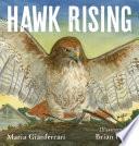 Hawk Rising