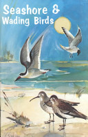 Seashore and Wading Birds of Florida