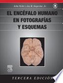 El Sistema Nervioso Central Humano En Fotos Y Esquemas Funcionales