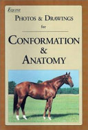 Equine Photos   Drawings for Conformation   Anatomy