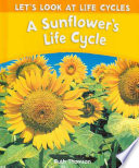 A Sunflower's Life Cycle PDF