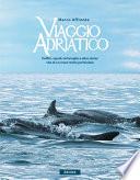 Viaggio Adriatico  Delfini  squali  tartarughe e altre storie  vita di un mare molto particolare