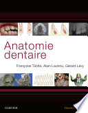 illustration Anatomie dentaire