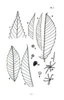 Chestnut Papers