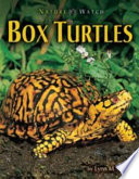 Box Turtles The Length Of A Football Field