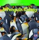 A Penguin Colony