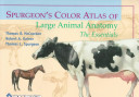 Spurgeon s Color Atlas of Large Animal Anatomy