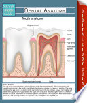 Dental Anatomy  Speedy Study Guides