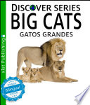 Big Cats Gatos Grandes