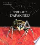 Portraits d araign  es