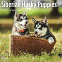 2020 Siberian Husky Puppies
