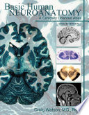 Basic Human Neuroanatomy  A Clinically Oriented Atlas