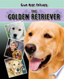 The Golden Retriever : every advantage they can get from their education....