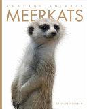 Amazing Animals  Meerkats