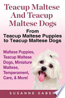Teacup Maltese and Teacup Maltese Dogs