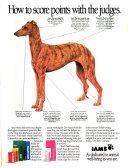Pure bred Dogs  American Kennel Gazette