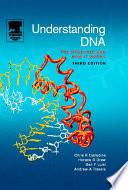 Understanding DNA