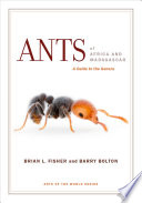 Ants of Africa and Madagascar Of The Most Conspicuous And
