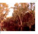 Australia Beneath the Southern Cross Book PDF