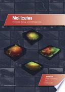 Mollicutes