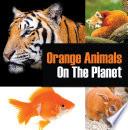 Orange Animals On The Planet