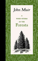 A Wind Storm in the Forests