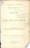 Culture of the sugar beet