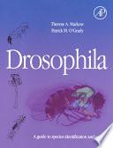 Drosophila book