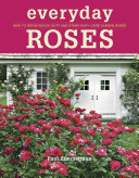How to Grow Knock Out   and Other Easy care Garden Roses