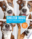 Shelter Dogs in a Photo Booth Bars It S No Wonder People Would Avoid