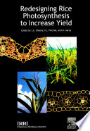 Redesigning Rice Photosynthesis to Increase Yield Book PDF