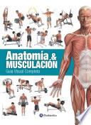 Anatom A Musculaci N