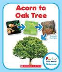 Acorn to Oak Tree How It Grows From An
