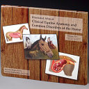 Illustrated Atlas of Clinical Equine Anatomy and Common Disorders of the Horse  Musculoskeletal system and lameness disorders