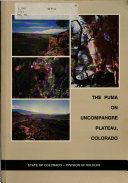The Puma on Uncompahgre Plateau  Colorado