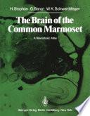 The Brain Of The Common Marmoset Callithrix Jacchus