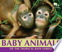 Baby Animals of the Tropical Rain Forest