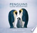 Penguins by David Tipling