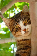Cat Peering Out In A Tree For The Love Of Cats