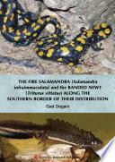 The Fire Salamandra Salamandra Infraimmaculata And The Banded Newt Triturus Vittatus Along The Southern Border Of Their Distribution